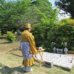 樹木葬でお墓の問題解決