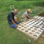 5万円の樹木葬リニューアル