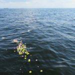 散骨で海に浮かぶ花